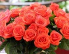 Festive greetings to the women of Uzbekistan
