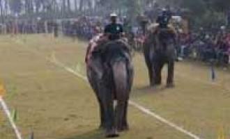Nepal hosts elephant festival, seeks to revive tourism