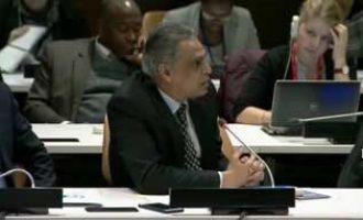 Haley, Akbaruddin discuss India-US cooperation