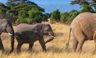 Myanmar to implement 10-year elephant conservation action plan