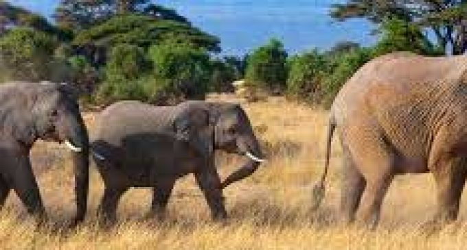 India, Bangladesh to set up working group on elephant conservation