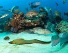 Mexico creates national park to protect marine life