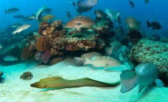 Mexico creates national park to protect marine life