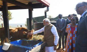 India donates 200 cows for Rwandan economic development project