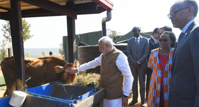India donates 200 cows for Rwandan economic development project