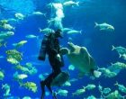 Ocean Dialogues 2021 to focus on climate, food, nature